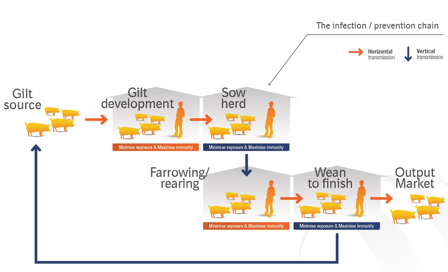 ch2 infection chain prevention chain